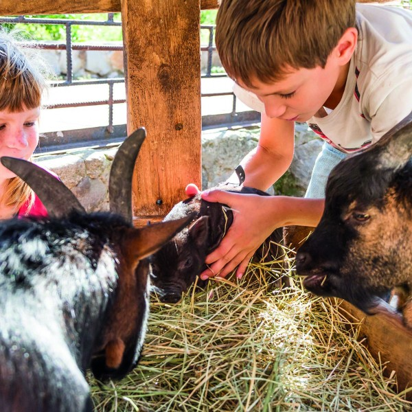 two kids – boy and girl – taking care of domestic animals on far